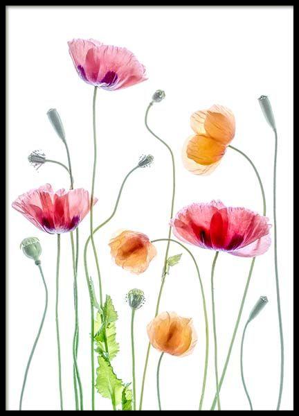 Plakater Posters Plakater I 30x40 Cm Desenio Dk Blomstermaleri Blomster Kunst Blomstertegning