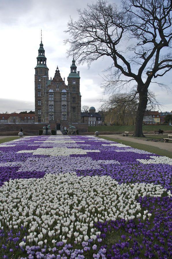 Denmark, Copenhagen; Crocus Bloom