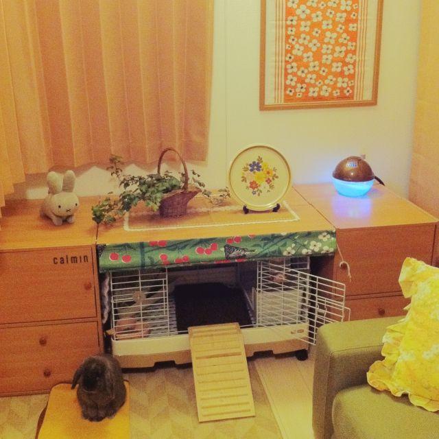 リビング うさぎ うさぎ部 Calmin うさぎと暮らす などのインテリア実例 2016 01 20 01 09 26 Roomclip ルームクリップ ウサギ用ハウス うさぎ ペットの部屋