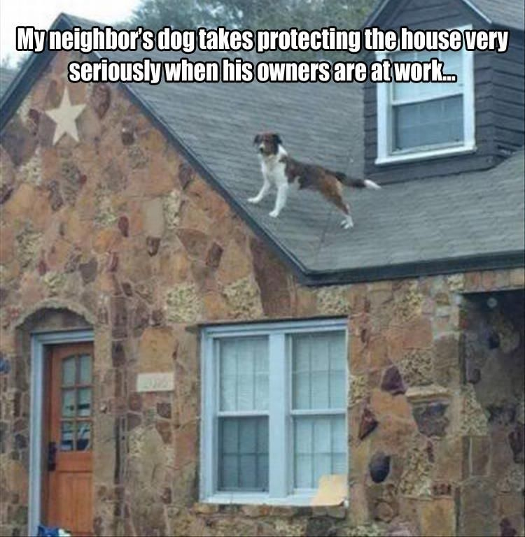 Afternoon Funny Picture Dump 31 Pics Funny Dogs Funny Dog Memes