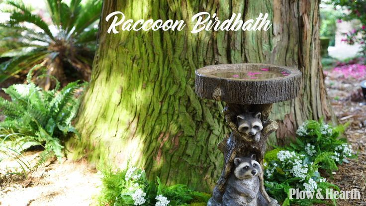 Raccoon Birdbath | Bird bath, Container plants, Ladybug house