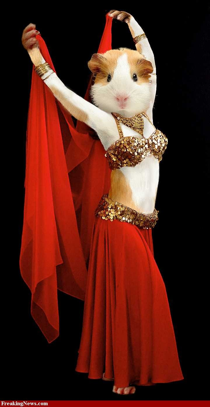 Colour therapy for stomach - Furry Belly Dancer