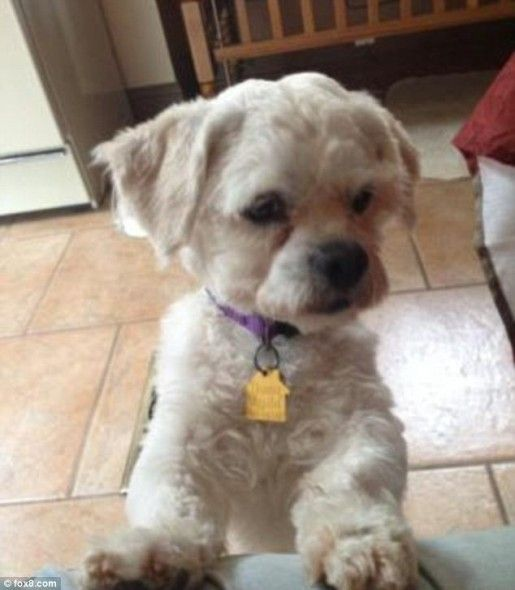 Cleveland Kidnapping Victim Adopts The Dog That Comforted Her Dog Adoption Shih Tzu Dog Weenie Dogs