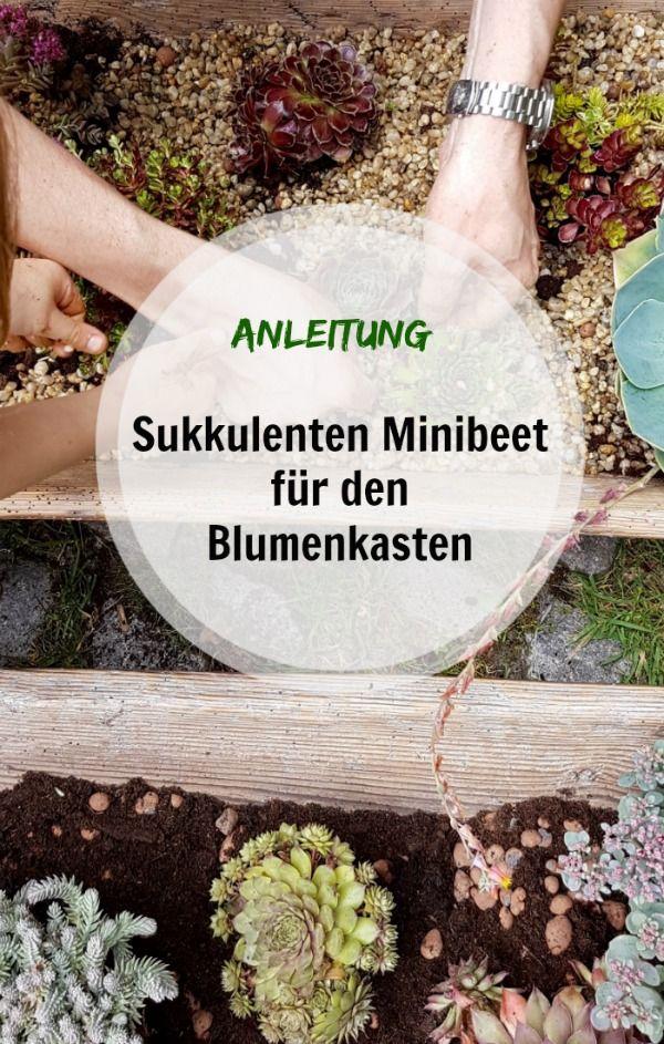 Anleitung Sukkulenten Minibeet im Balkonkasten: Dekorativ und kinderleicht