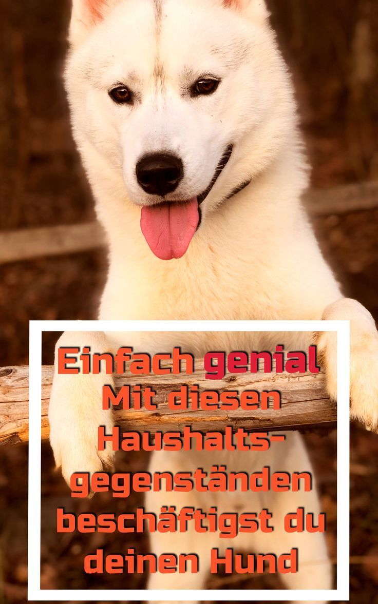 Pin Von Anna Die Auf Doggy In 2020 Hunde Hund Beschaftigen