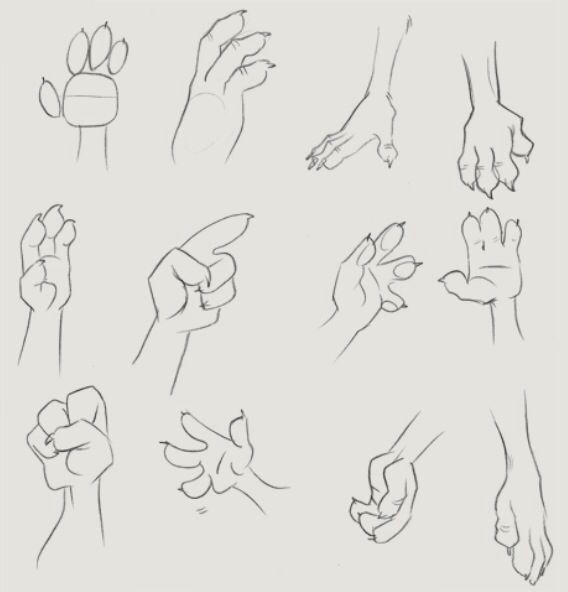 Three fingered paw tutorial   Furry/Anthro Tutorials   Pinterest .