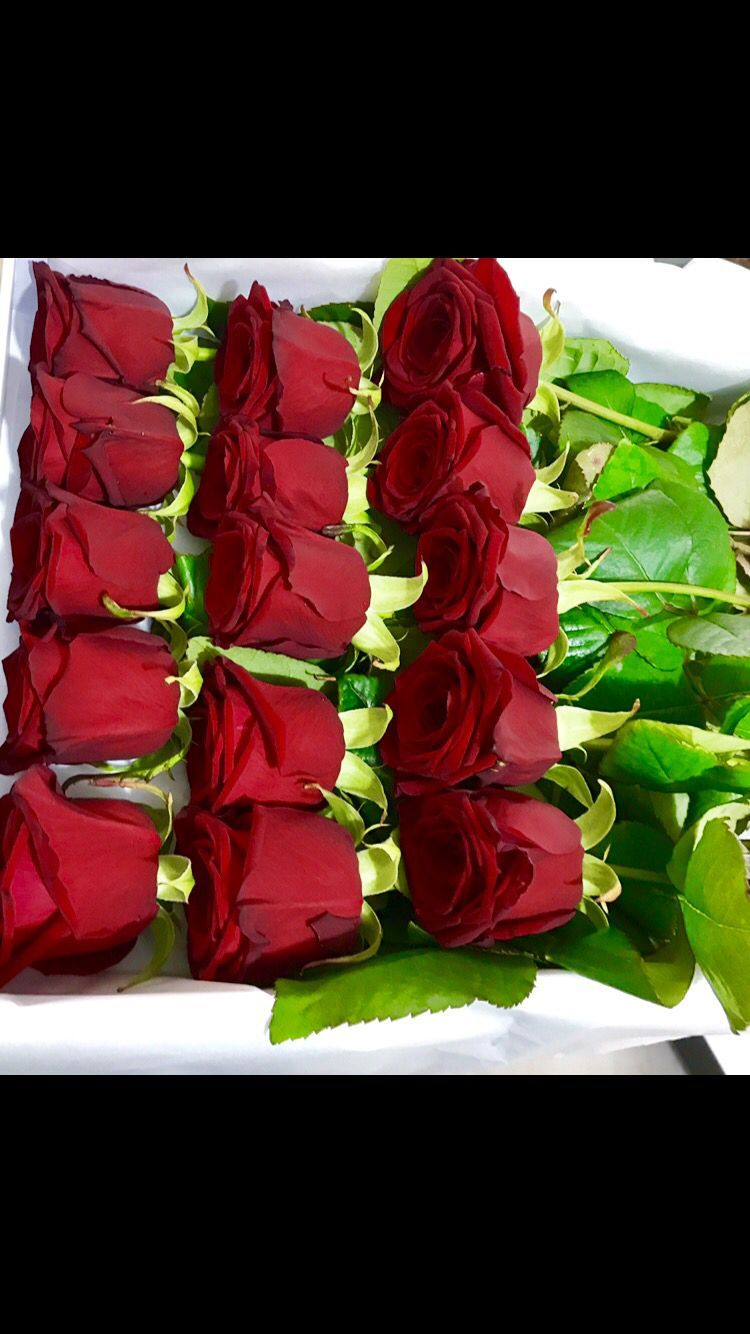 Send 15 Kisses Today Roses Love Crystalroseslondon Londonflorist Birthdaygift Anniversarygift London