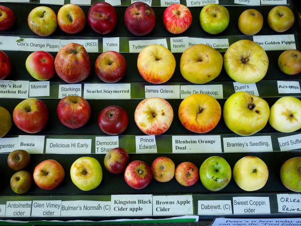 photo of different apple varieties | apples | Apple ...
