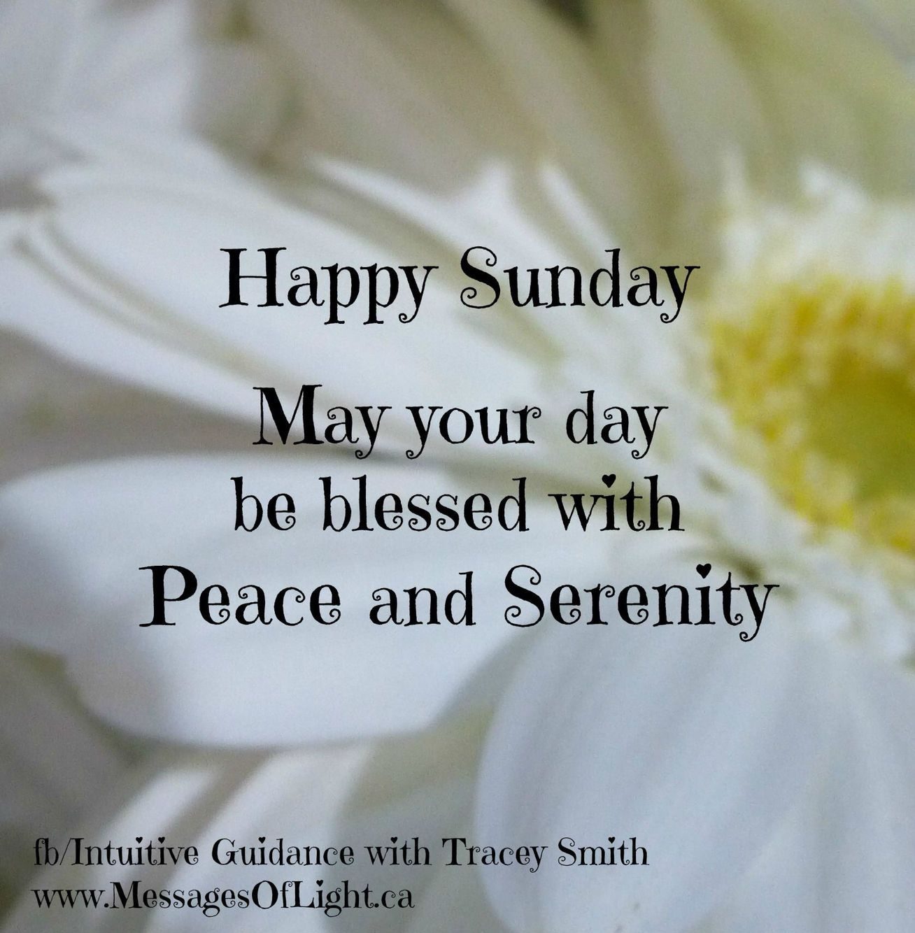 Good Morning And Happy Sunday Text : Happy sunday may your day be blessed quotes
