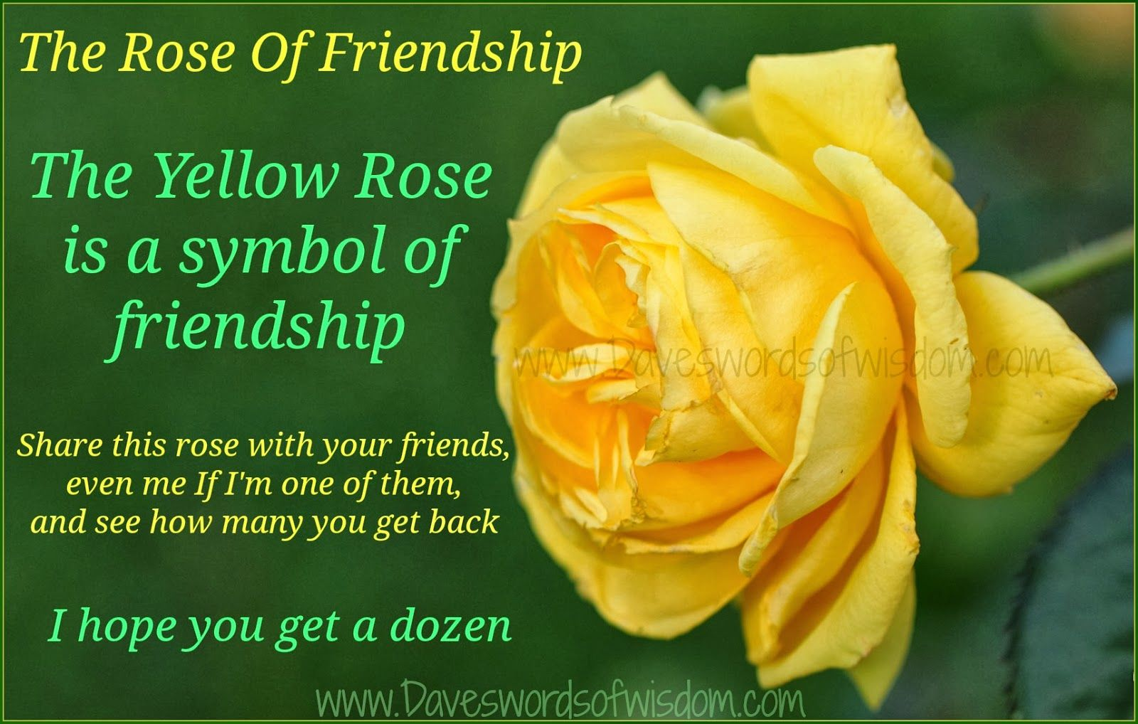 The Yellow Rose is a symbol of friendship. Share this rose