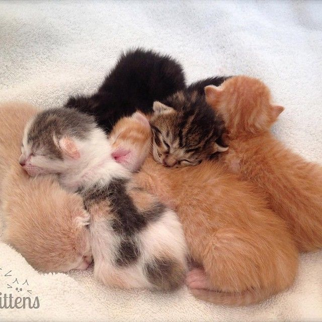 Our First Kittencam Litter Born Two Years Ago Today Mama Cat Sleeping Kitten Kittens