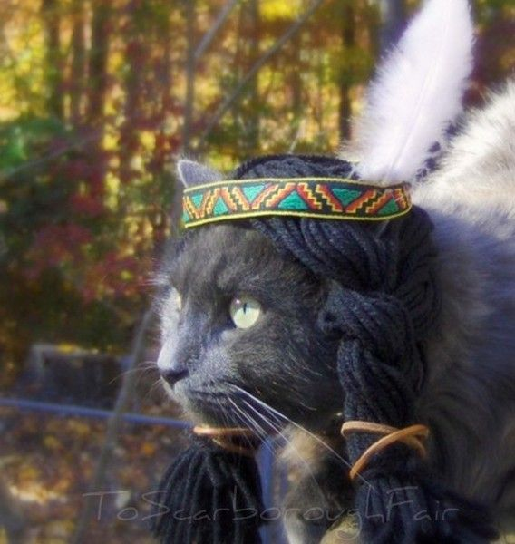 Native American Kitty Costume letterdesk