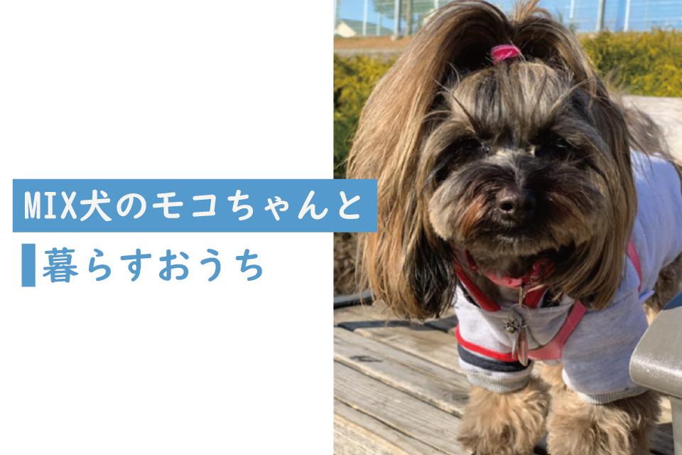 ミックス犬 戸建て 2ldk で暮らす飼い主さんの暮らしについて取材をしました ペット可賃貸マンションや戸建て物件で暮らし方の参考にしてください ペット可住宅 2021 犬 ミックス犬 ペット
