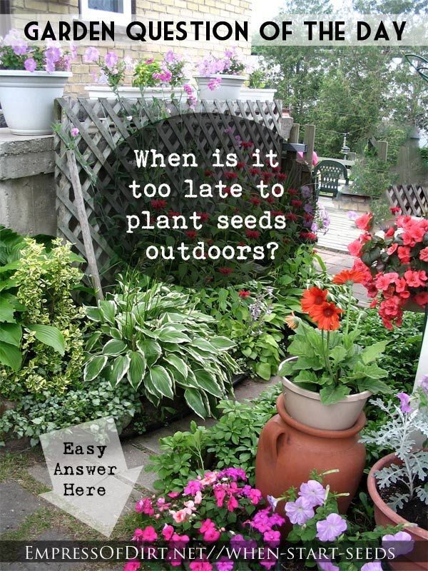 how to grow plants from seeds outdoors