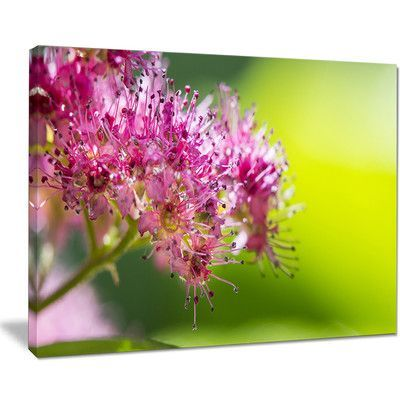 DesignArt Pink Little Flowers in Green Floral Photographic Print on Wrapped Canvas Size: