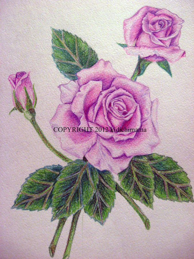 Pencil Drawings Of Flowers And Butterflies With Colours Google Search Flower Drawing Pencil Drawings Of Flowers Pencil Drawings