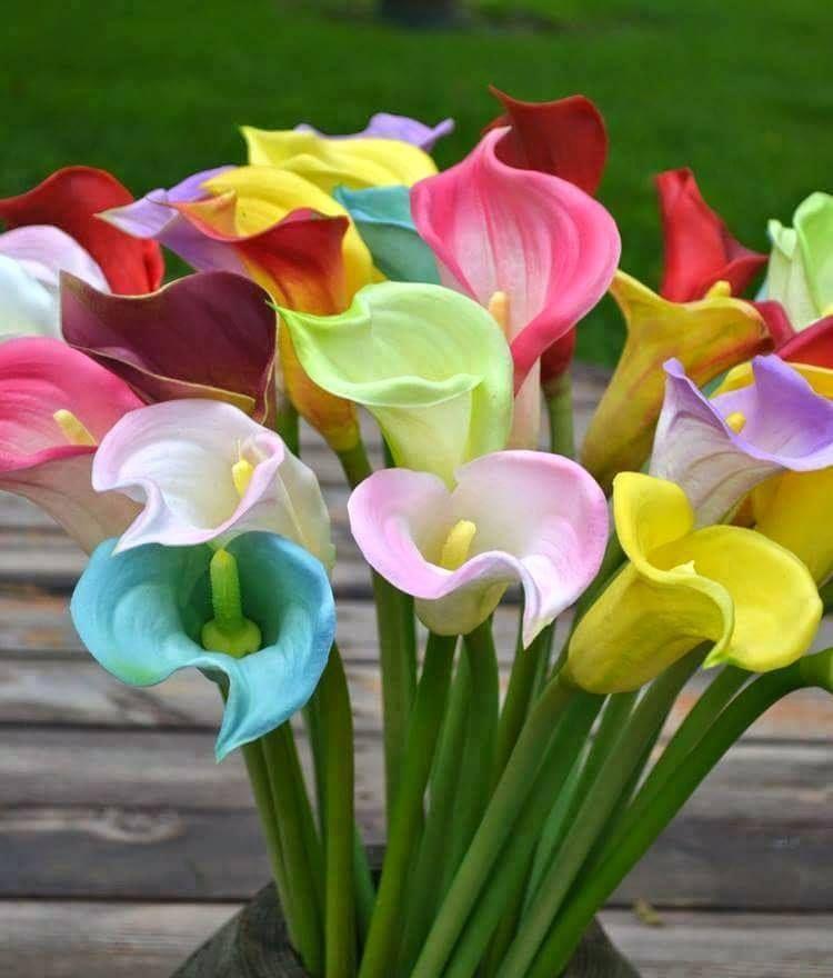 Cartuchos De Colores Hermosas Flores Beautiful Flowers Saludos