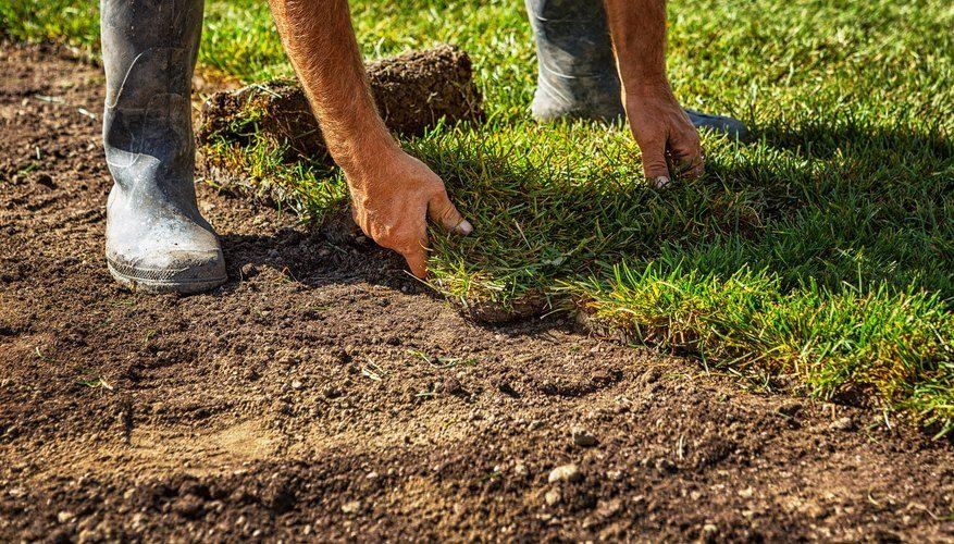 Plug Vs. Sod in 2020 Sod installation, Fall lawn