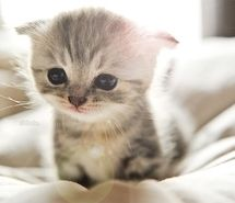Inspiring picture adorable, animal, awww, bed, cat, curious.