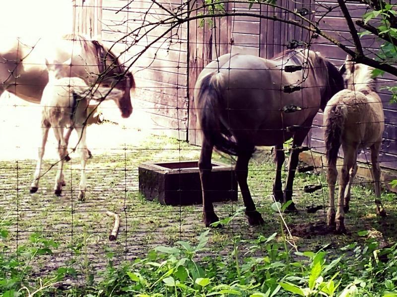 #Wildgehege #Pferde #Natur #Neandertal #Neanderthal-Museum #Reisen #Travel #Familie #Familienausflug #Tiere #Wald #Ferienwohnung