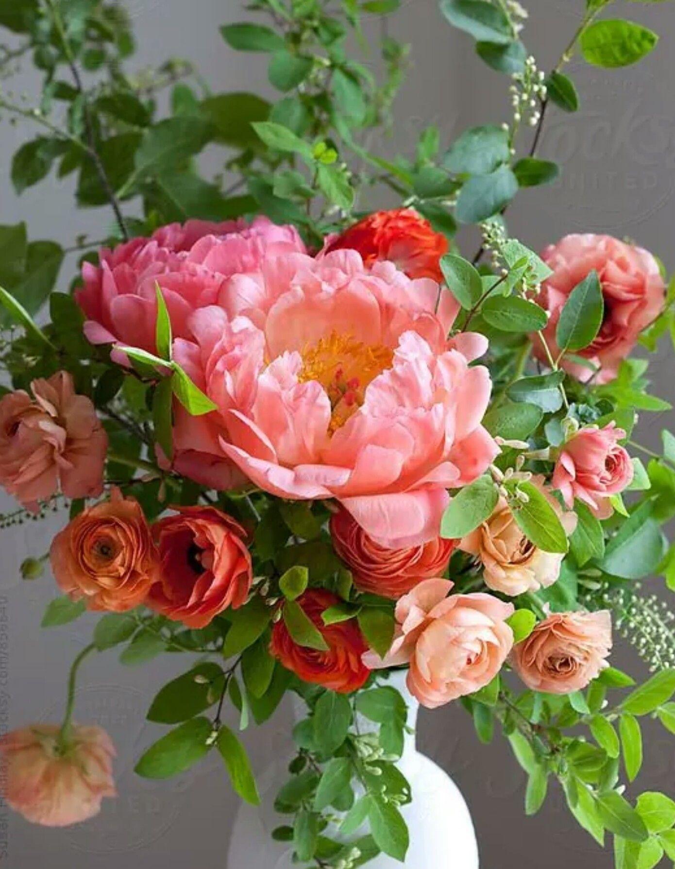 Gorgeous My World Of Flowers Pinterest Flowers Pretty Flowers