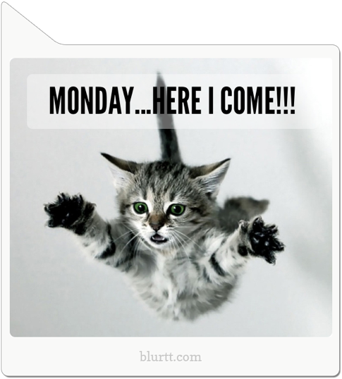 quotmonday here i comequot cats probably hate mondays