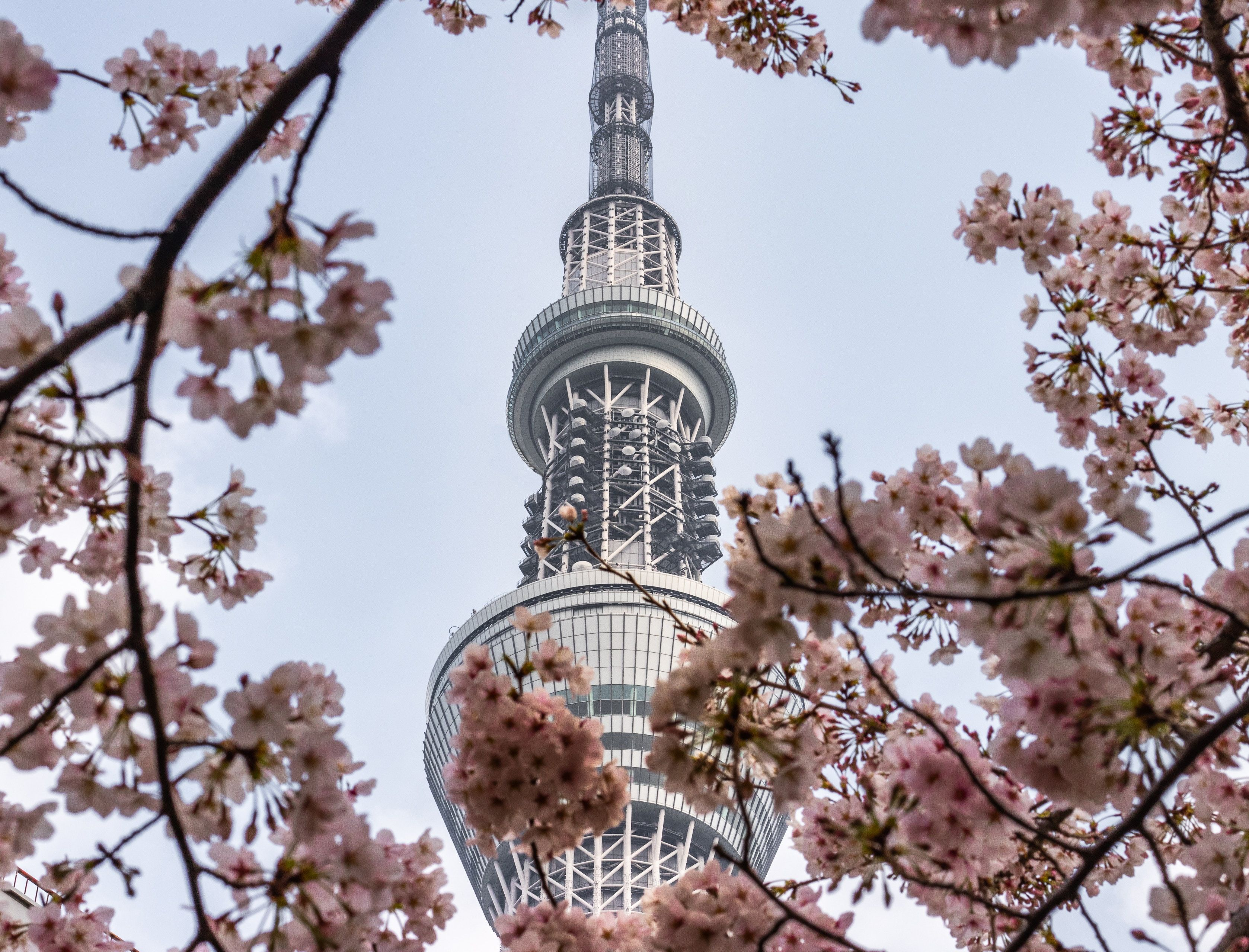 Our Pick Of The Month Tokyo Sky Tree Because We Are Missing Sushi Cherry Blossoms And The Stupendous View Tokyo Skytree Tokyo Picture Attractions In Tokyo