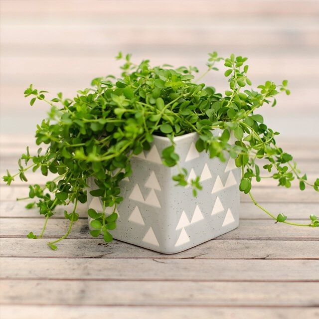 We just wanna put all our small plants in KOSMOS pots. 10x10 cm makes it perfect for succulents and cacti.  79 SEK/NOK