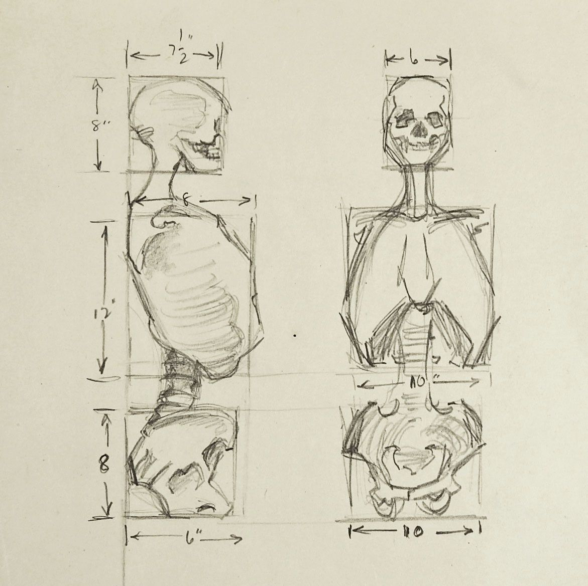 Pencil on paper human anatomy study of skeleton. Unsigned. Unframed ...