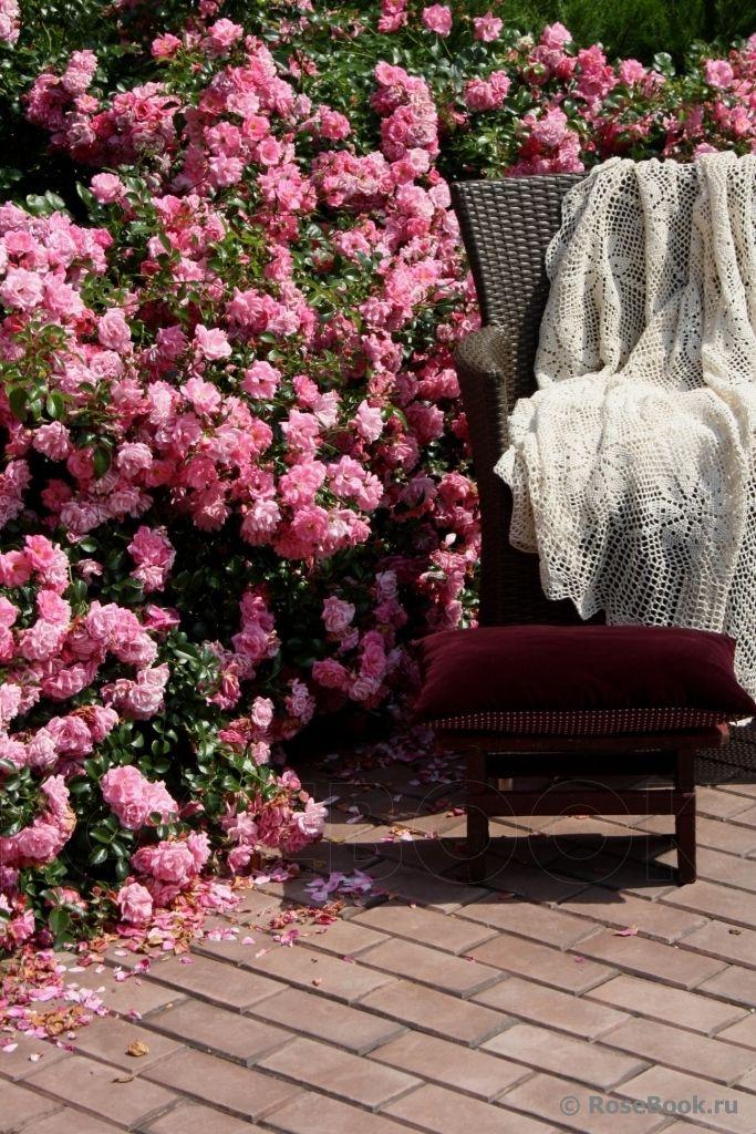 Superb Palmengarten Frankfurt Roses in russian privet gardens Pinterest Dream garden and Gardens