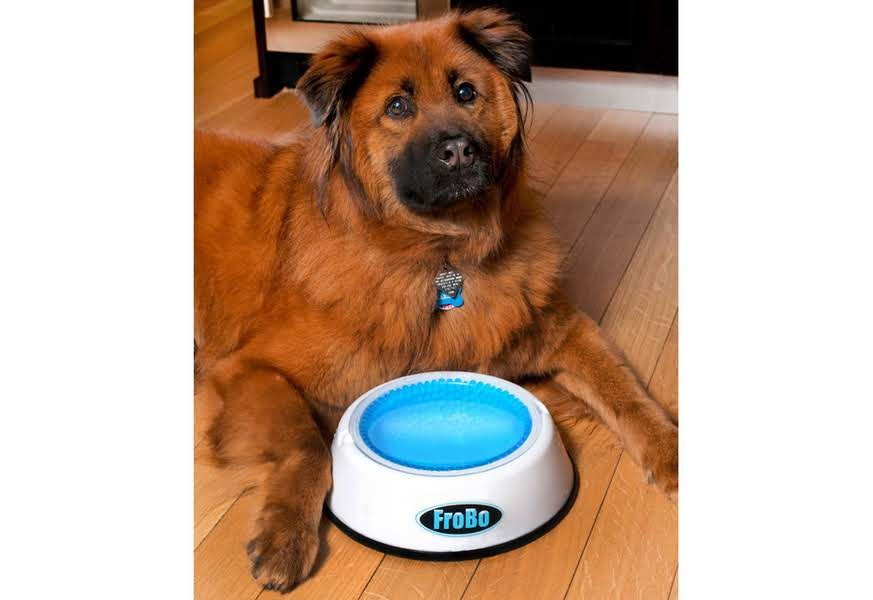 Cooling Pet Bowl Sharper Image Dog Water Bowls Pet Bowls