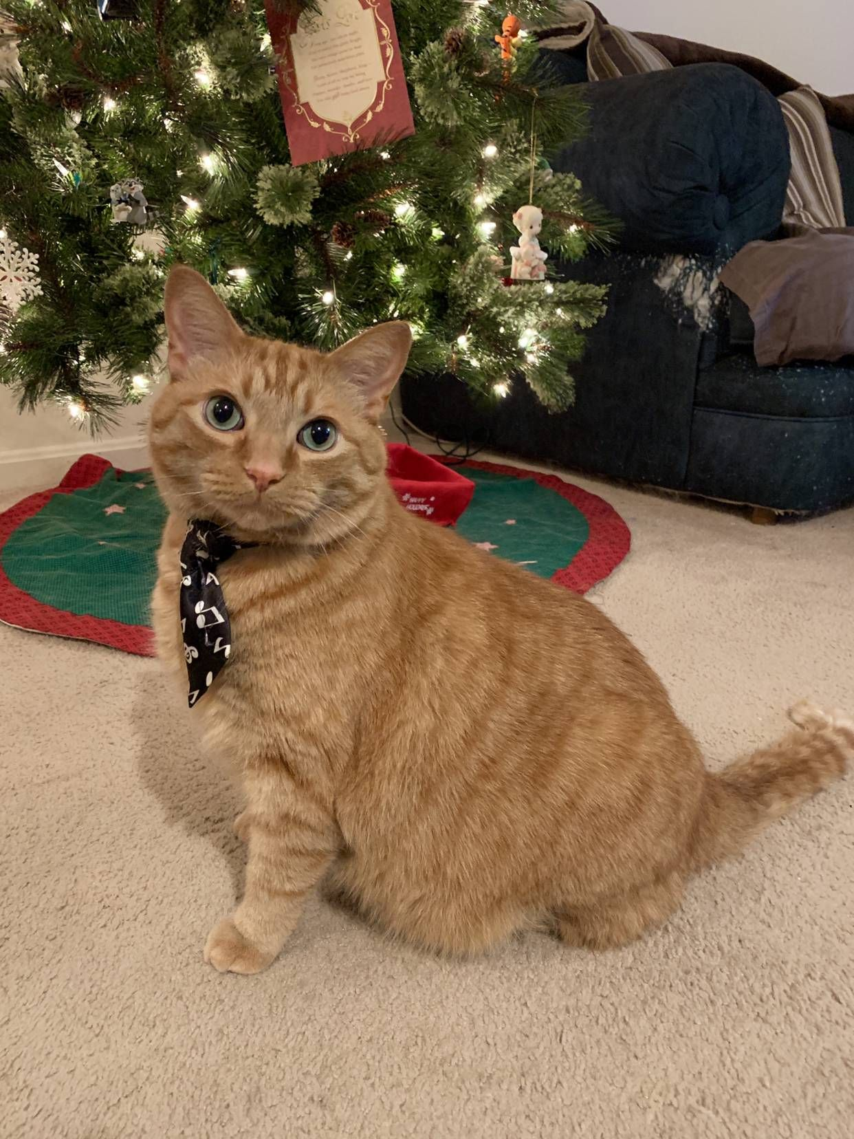 Happy New Year Reddit Love Dewey Funny Christmas Pictures Christmas Cats Kitty