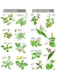 Petit atlas des plantes comestibles plantes m dicinales for Plante comestible
