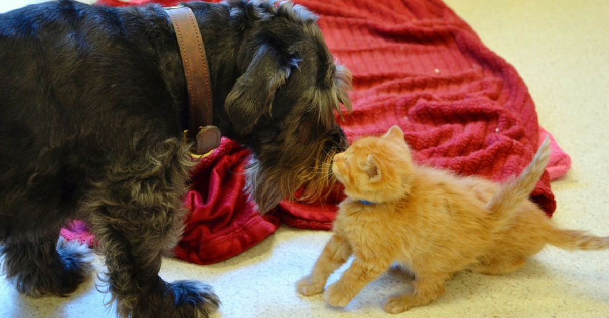 Rescue Dog Mothers Orphaned Kittens, But Now She Goes