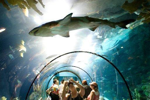 Moody Gardens Aquarium Galveston Tx Favorite Places