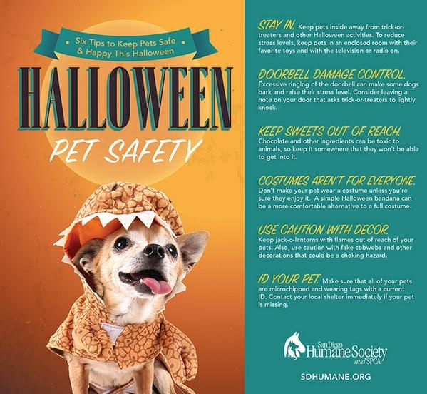 San Diego Humane Society On Pet Safe Pets Halloween