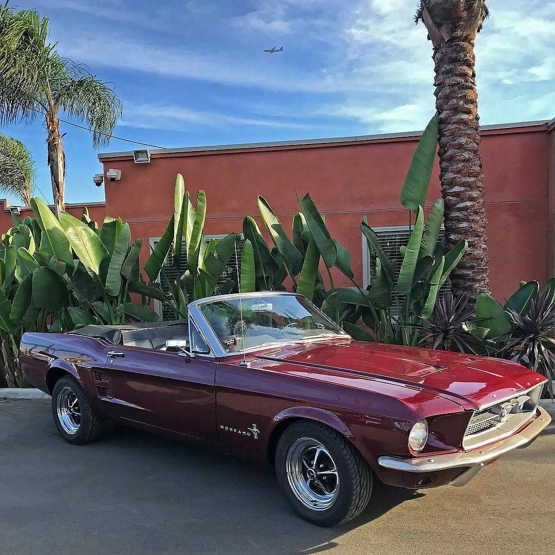 from beverlyhillscarclub mustangmonday 1967 ford mustang convertible beautiful burgundy with black interior