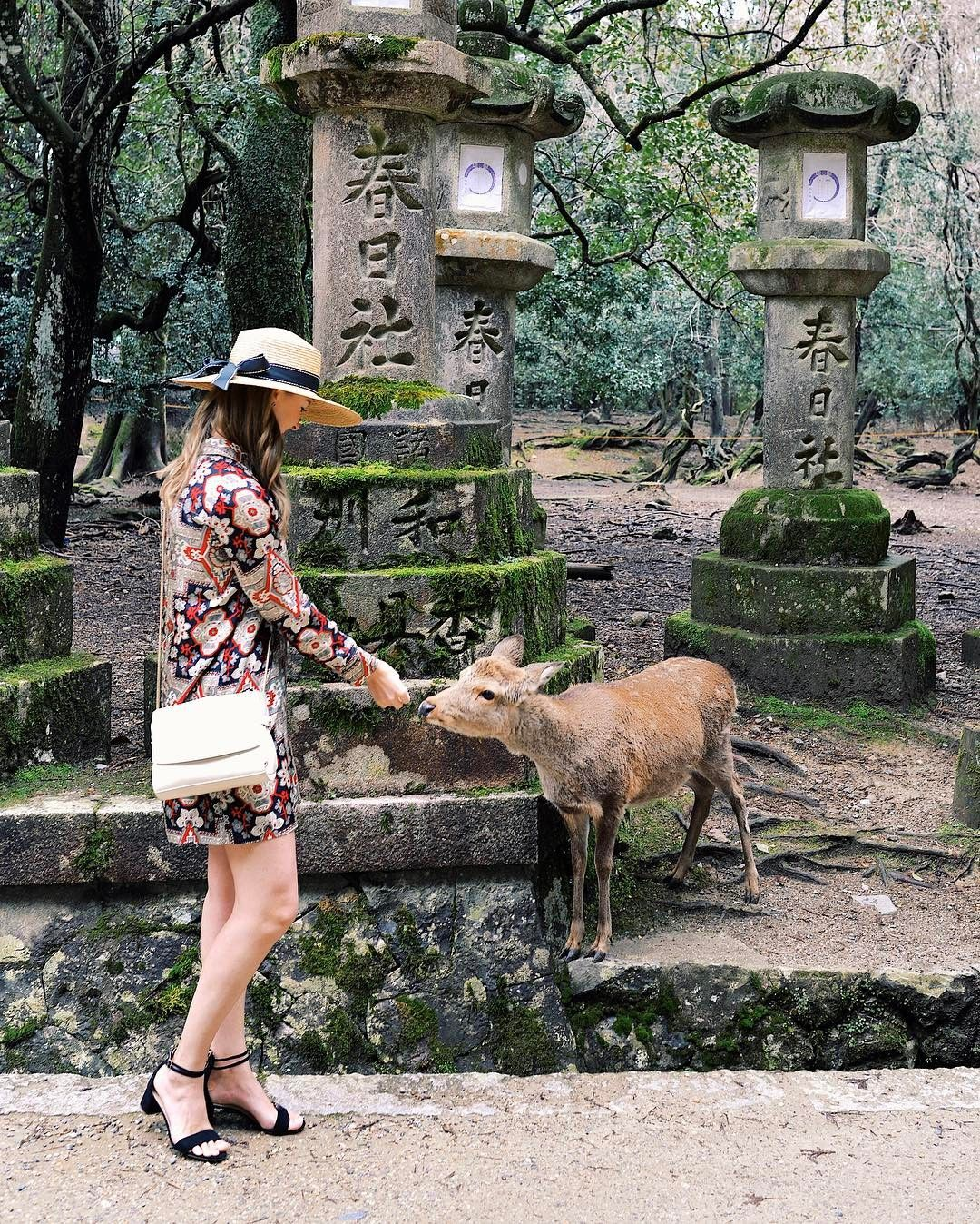 Making new friends in Nara Park. 🦌 #flinnersinjapan