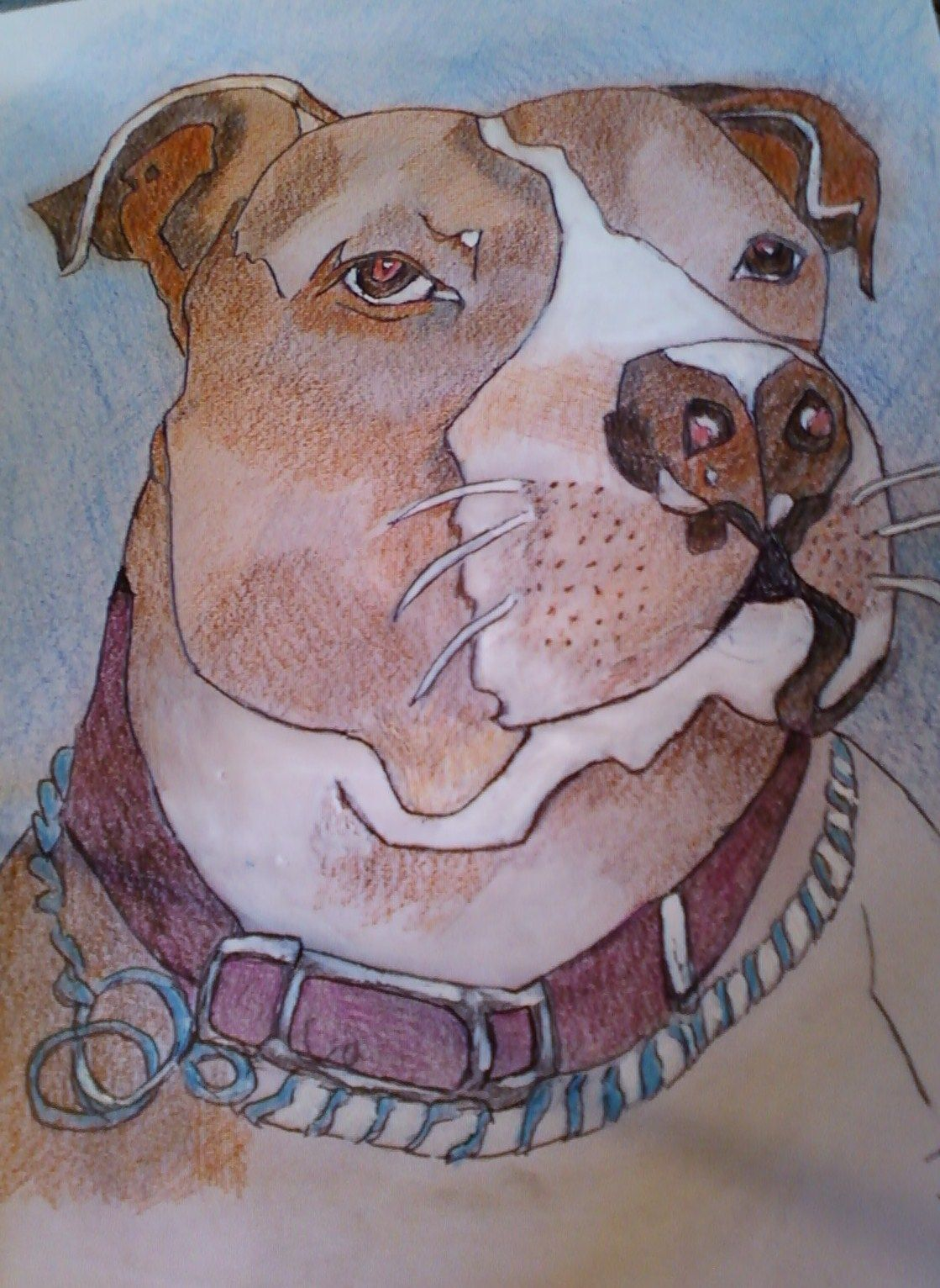 JD the Pit Bull, (color pencil and acrylics)