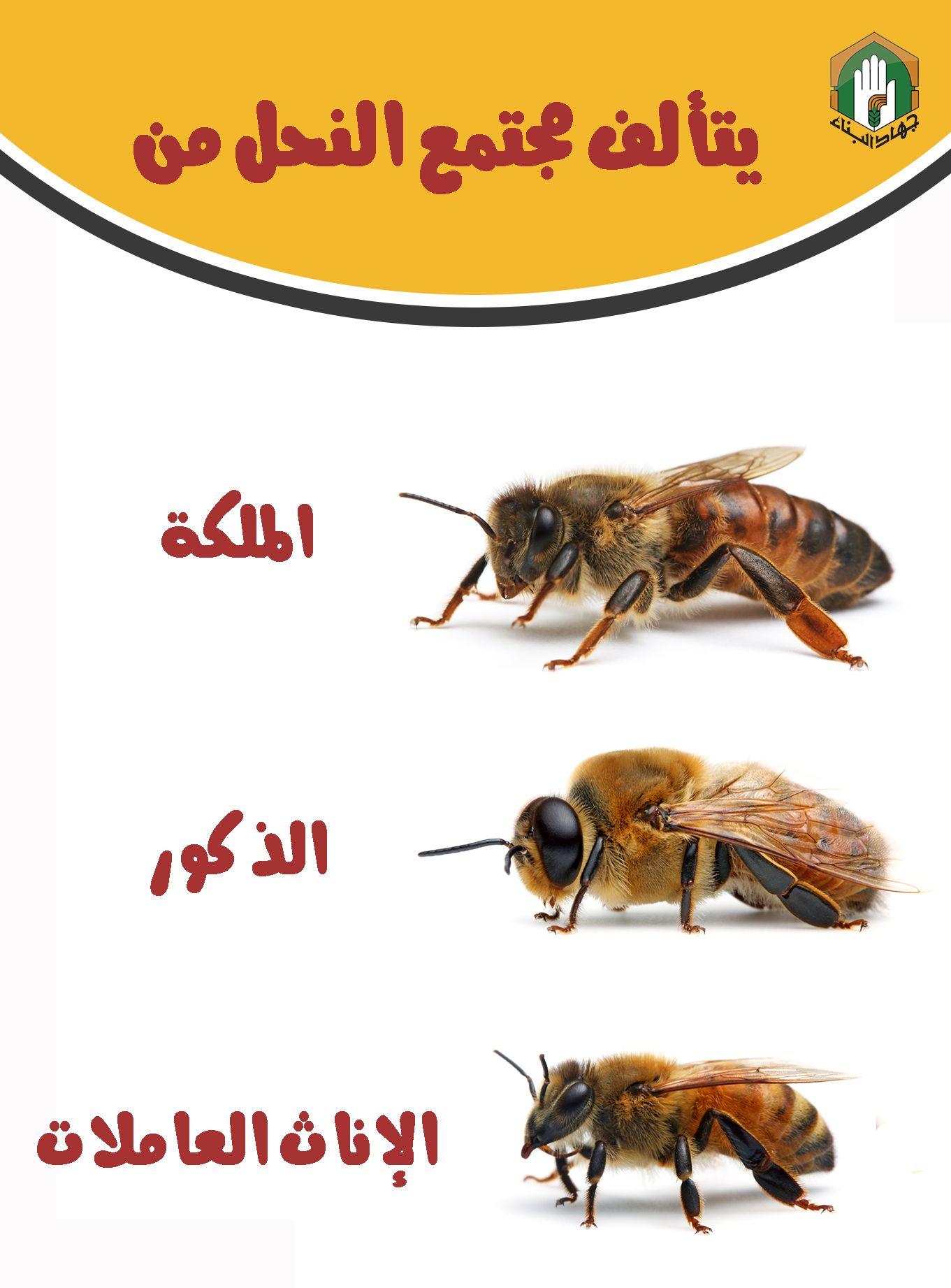 مجتمع النحل Art Bee Black And White