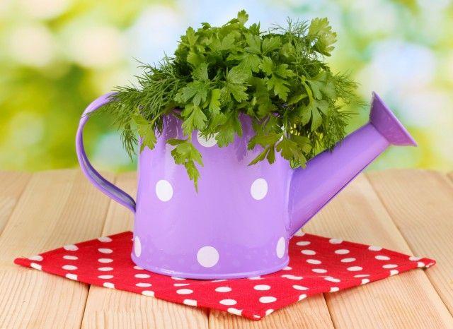 Come coltivare il prezzemolo in vaso for Coltivare more in vaso