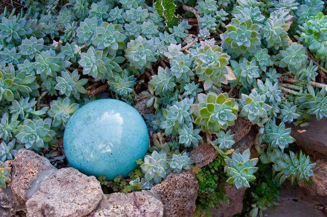 Feuillage Bleu Feuillage Jardin Interieur Jardins