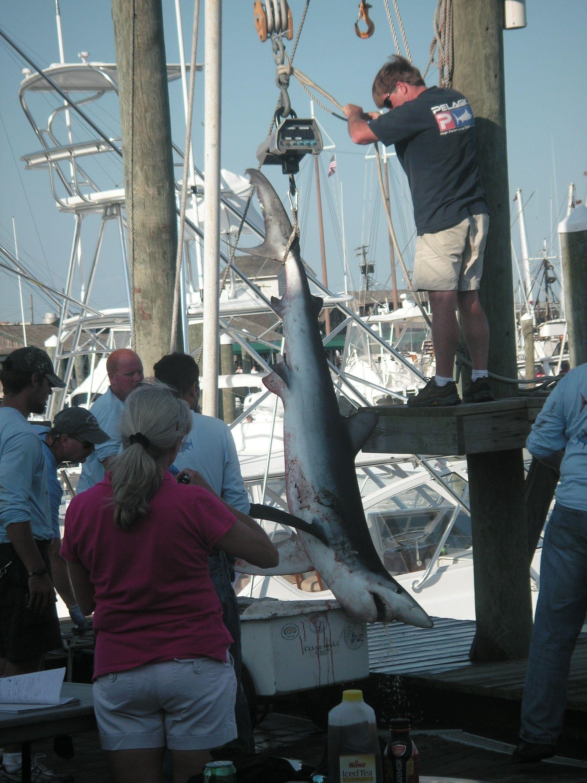 South Jersey Shark Tournament 2012 #InterCasino