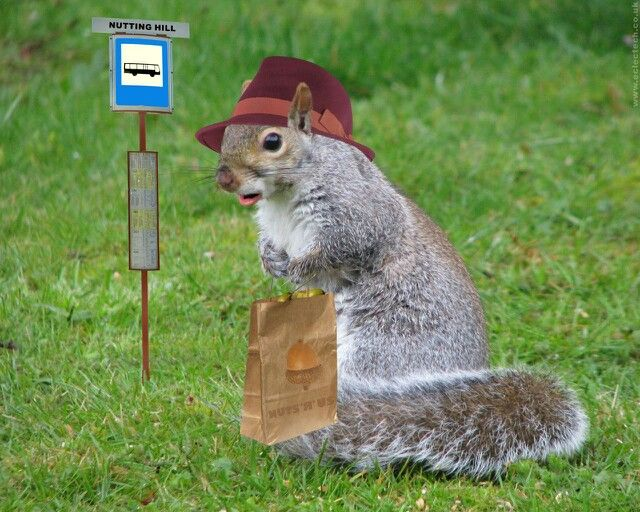 Squirrel Waiting For Bus Squirrels And Rabbits Small Animals - Student befriends campus squirrels then dresses them in the cutest outfits ever