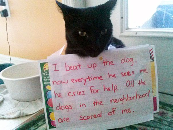 Beats Up Dogs | Here Are 25 Of The Worst Cats In The World