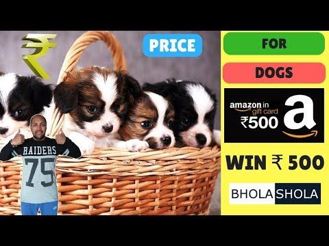 Pet Care Price For Dog Bhola Shola You Can Get More Details