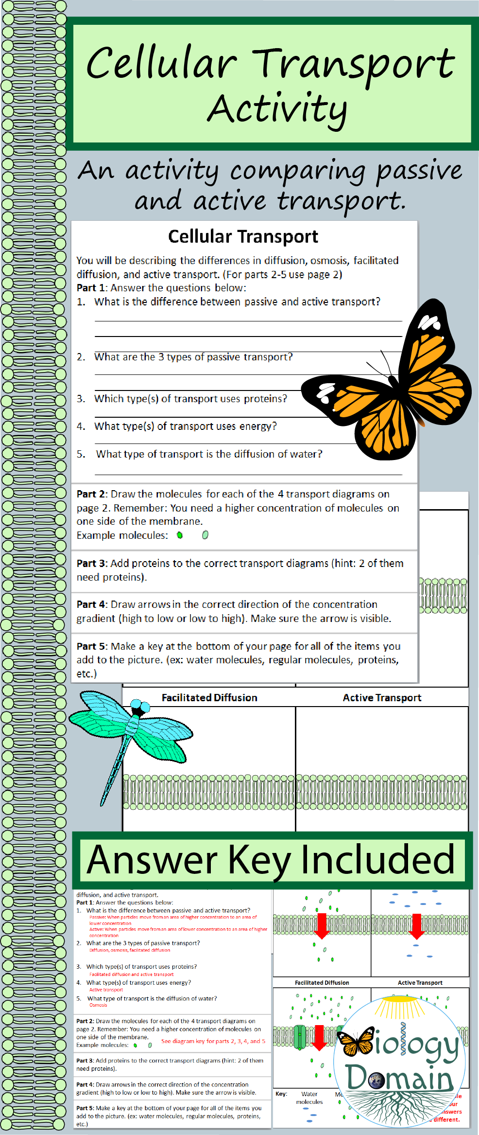 Transport Study Guide Key   Cellular Transport Review OSMOSIS In the likewise Cellular Transport Worksheet Image of awesome collection of cellular also  together with Cell Transport Worksheet Answer Key ABITLIKETHIS  Cellular Transport furthermore  in addition  further Kids  cell transport worksheet answers  G Cell Transport Worksheet furthermore Cellular Transport Worksheet Answer Key Cell Structure and Function moreover Cellular Transport Test  Review Questions  and Answer Keys by as well Cellular transport review answer key moreover Cellular Transport Worksheet Answers Transport Across Memnes in addition  further Cellular Transport Worksheet Name also  additionally clification of chemical reactions worksheet Discussion further Transport In Cells Worksheet Answers Fresh Cell Memne Coloring. on cellular transport worksheet answer key