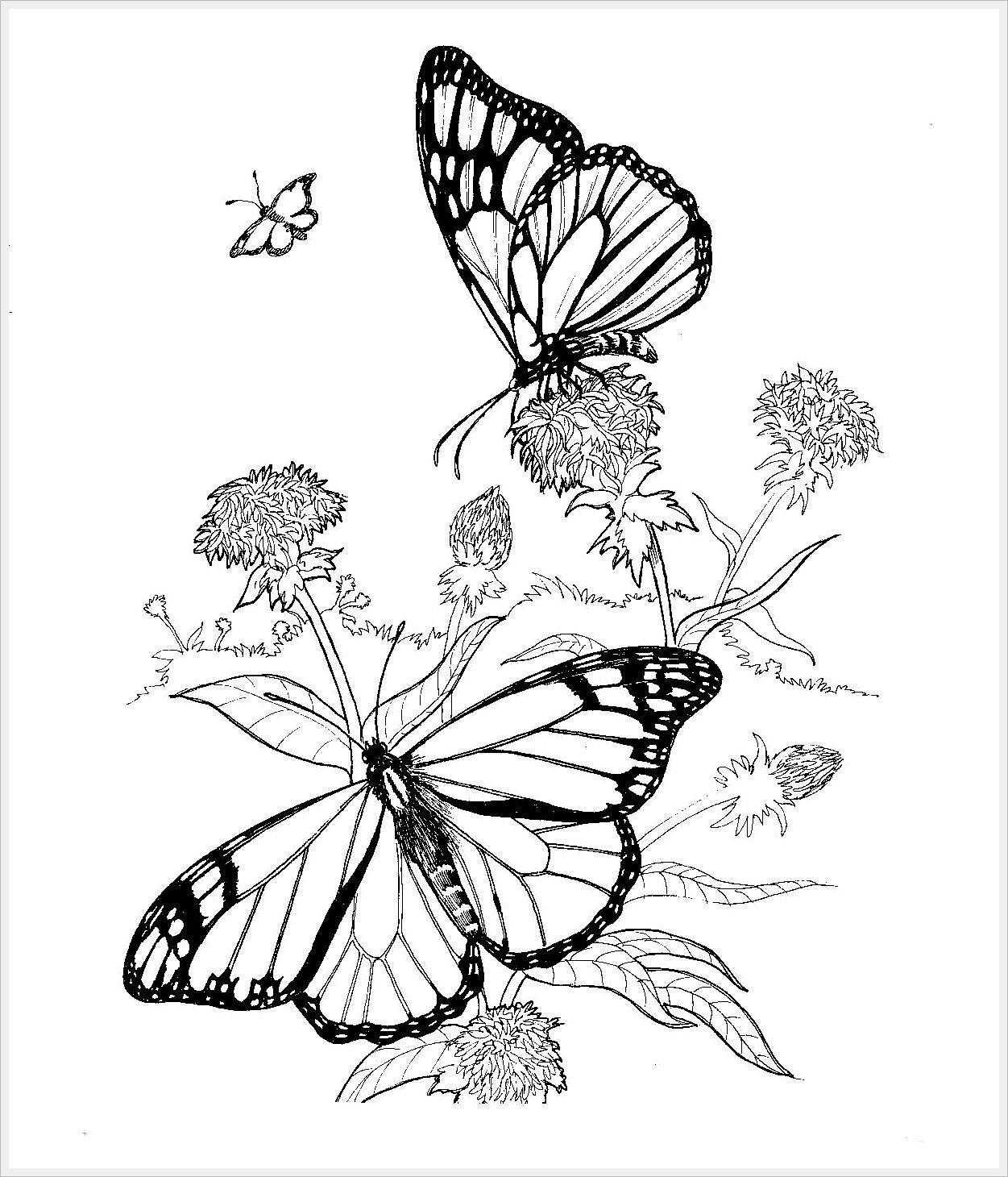 Бабочки. Раскраска от Jan Sovak. Обсуждение на ...