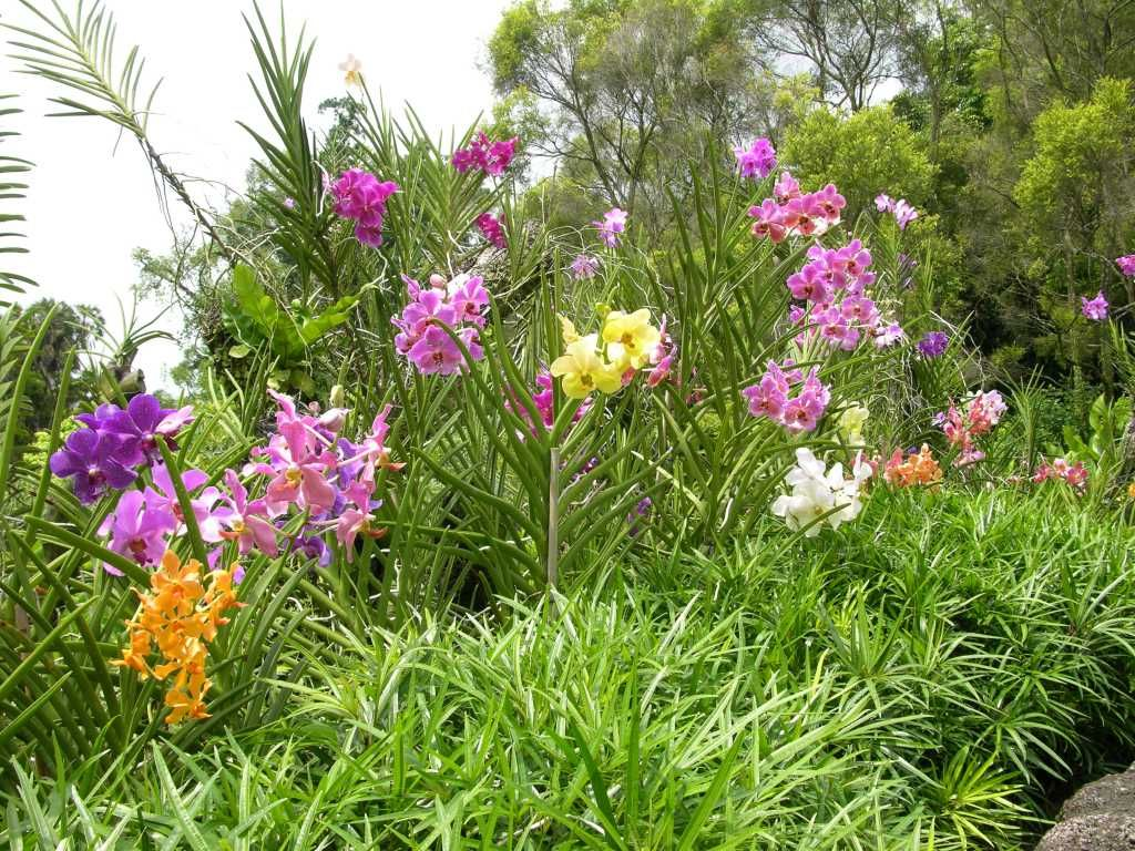 Pin by Alice Pouliou on Singapore National Orchid Garden