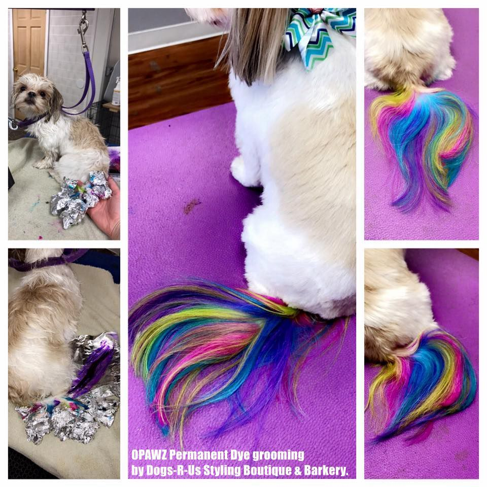 Creative Work With Opawz Permanent Dog Hair Dye Done By Dogs R Us Styling Boutique Barkery Doggroomingide Creative Grooming Dog Grooming Salons Dog Grooming